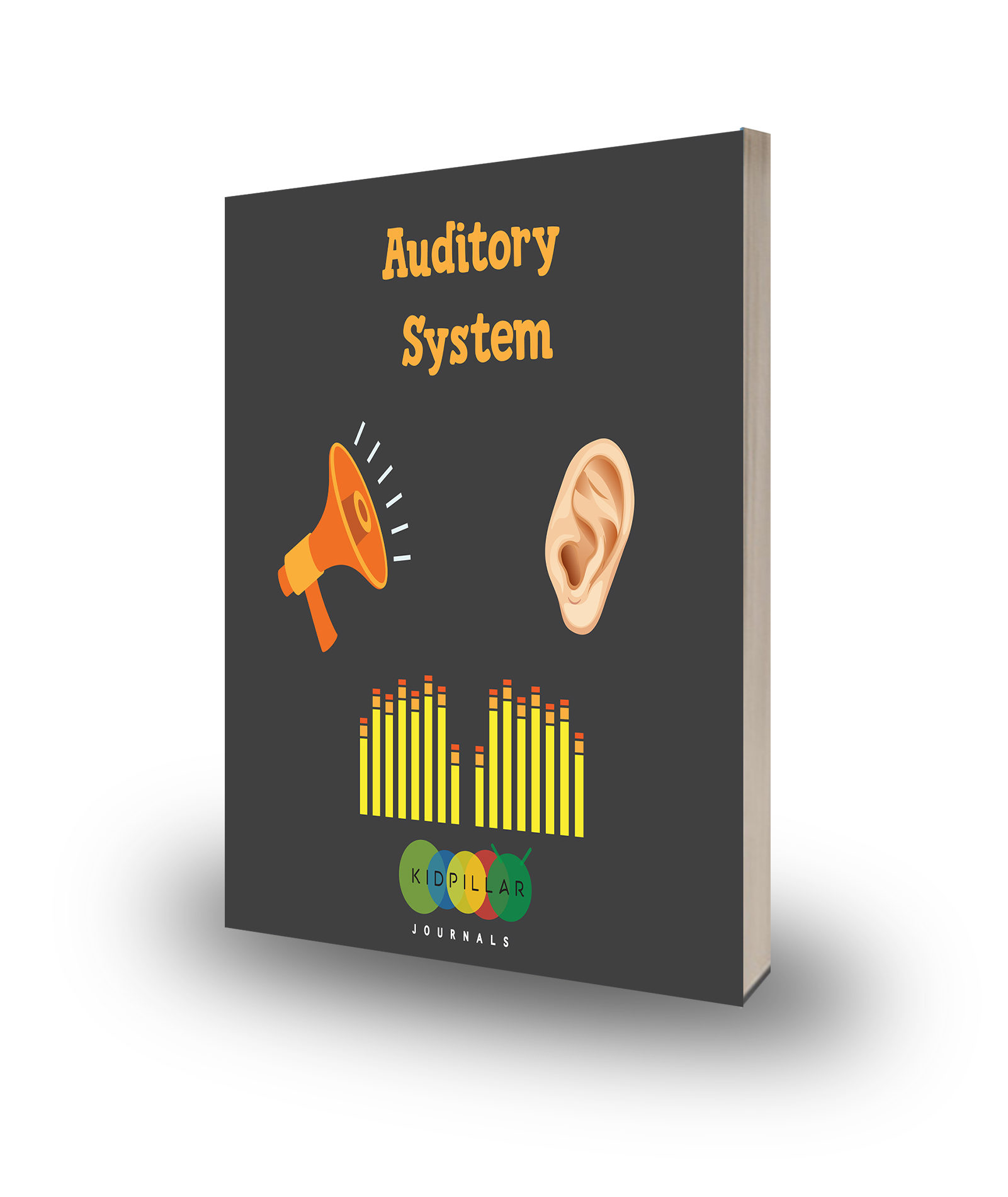 Auditory System Sense Of Hearing For Kids