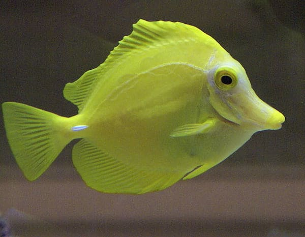 fish sleeping facts for kids