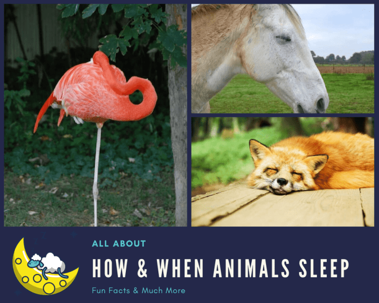 how animals sleep