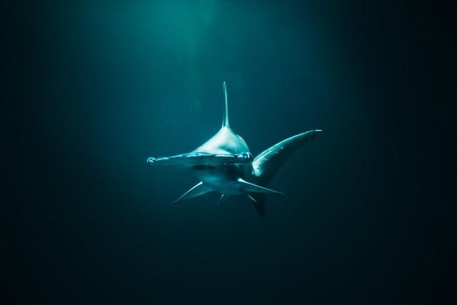 Shark Day for kids