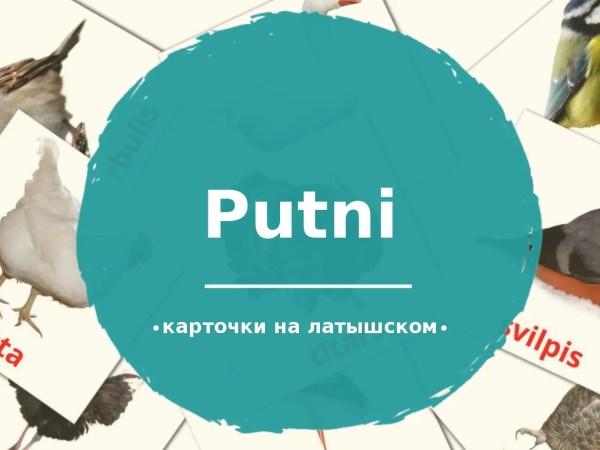 28 бесплатных карточек Птицы для детей на Латышском (PDF ...