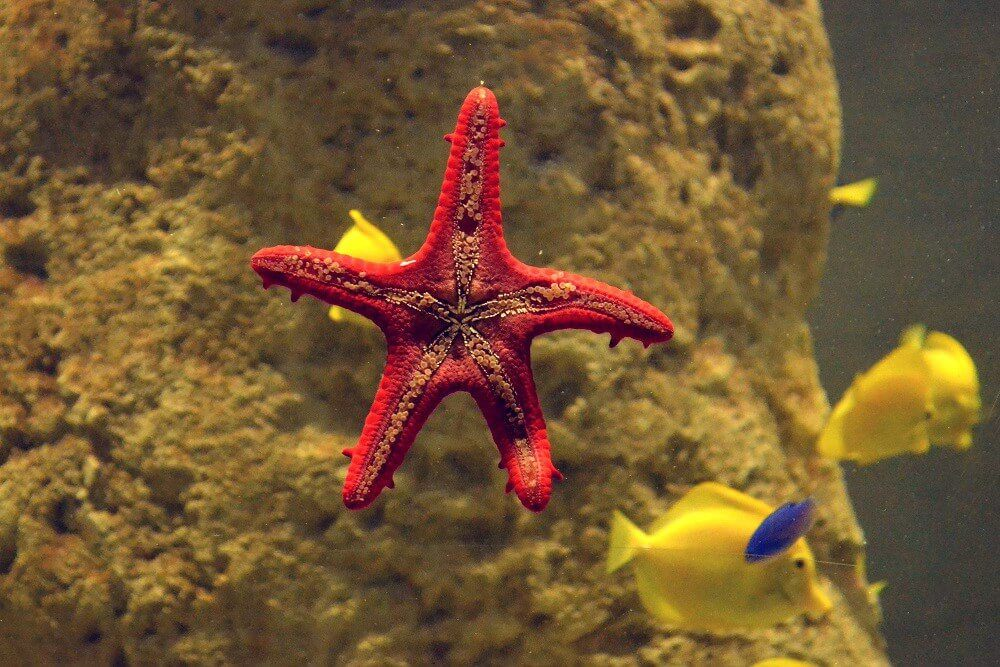 starfish in an aquarium malta