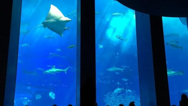 沖縄美ら海水族館の大水槽を見ながらランチ