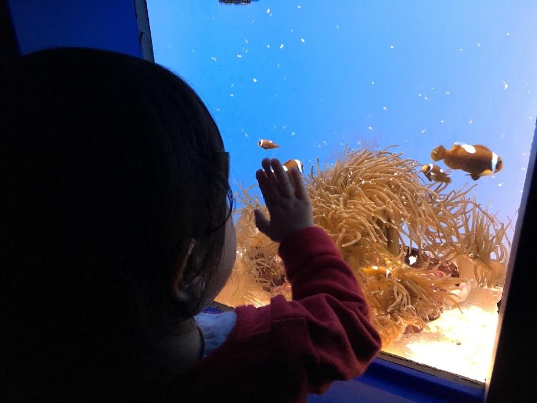魚を見る娘