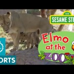 Sesame Street: Elmo Meets Animal Families (Elmo at the Zoo #6)