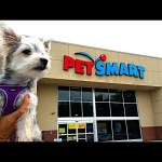 Zumi's New Haircut and Pet Store Visit – Puppy Toys, Clothes and Treats – DCTC Morkie