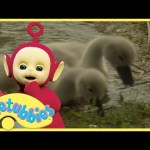 Teletubbies Full Episodes – Cygnets | Teletubbies English Episodes