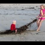Seaweed Sled