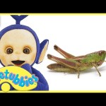 Teletubbies Full Episode – Grasshopper | Episode 309