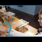 Kids playing with animals at Green Planet . Funny Video