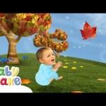 Baby Jake – Chasing Leaves! | Full Episodes | Yacki Yacki Yoggi | Cartoons for Kids
