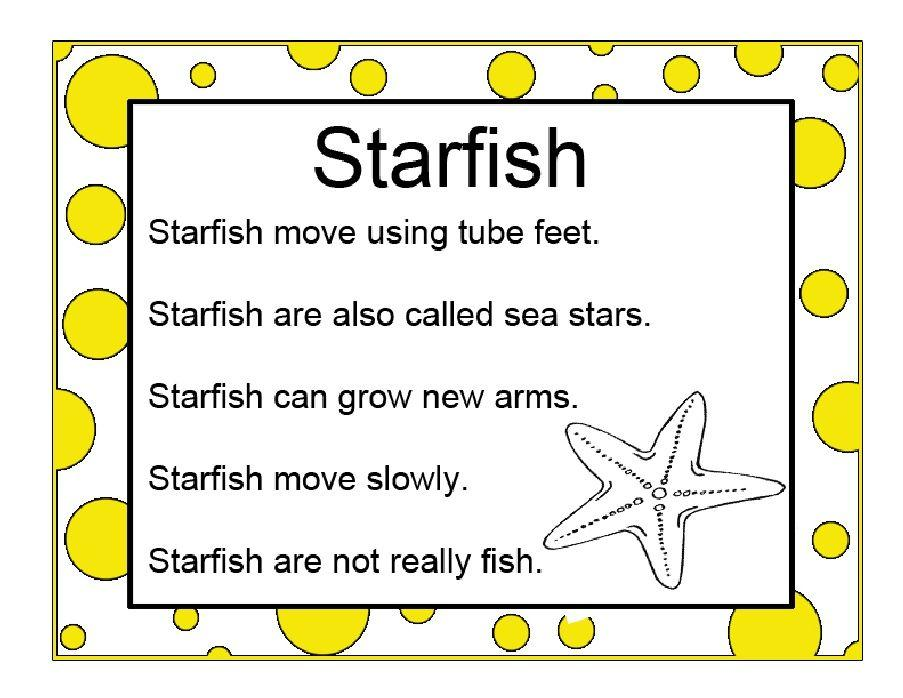 Beach Theme Worksheets For Preschool