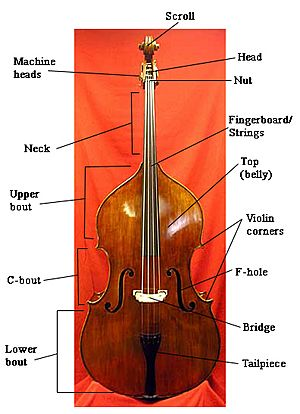 Double bass Facts for Kids