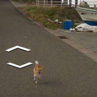 Cão persegue carro do Google Maps e aparece em todas as fotos