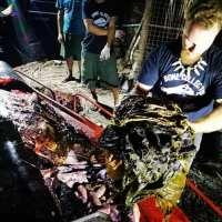 Baleia encontrada morta nas Filipinas, tinha 40 quilos de plástico no estômago
