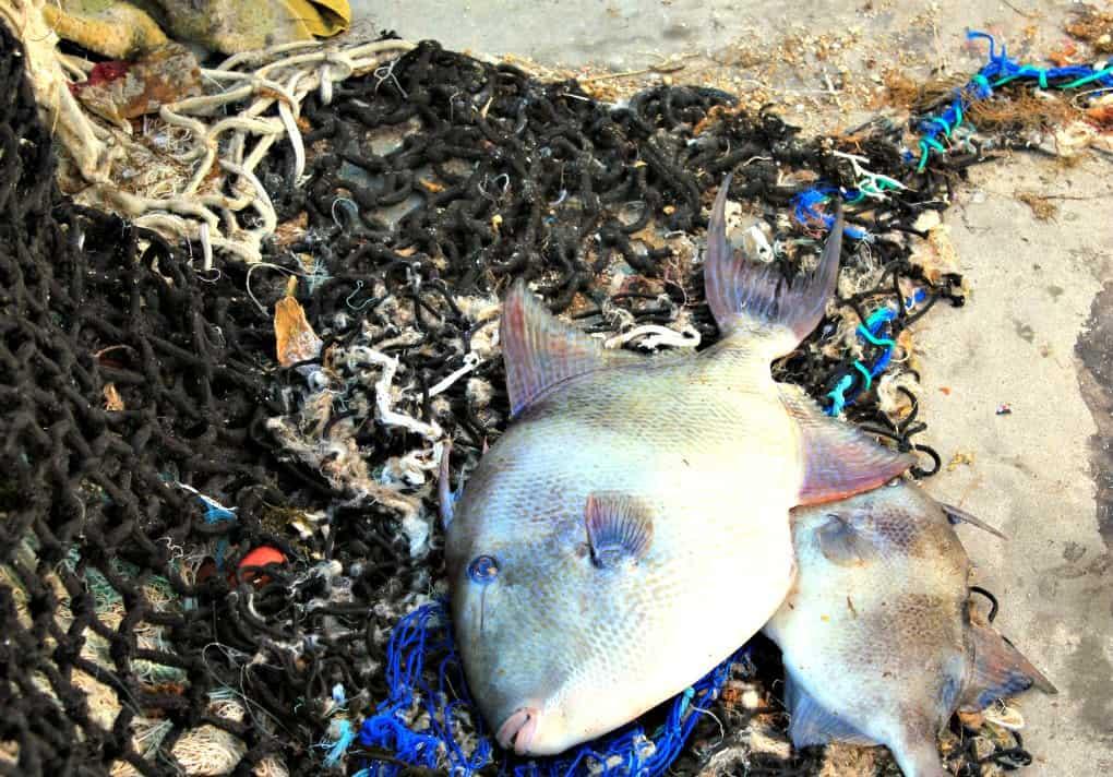 Port rybacki w Barbate