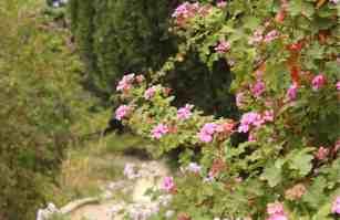 Parki w Hyeres