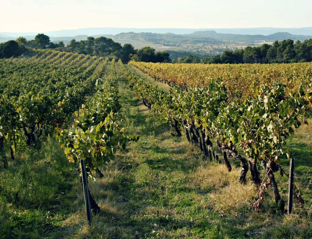 Jesienne winnice Luberonu