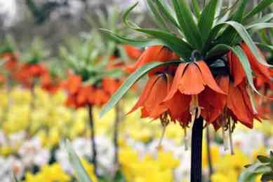 Holandia wiosna