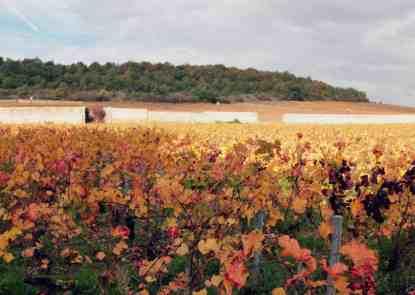 Burgundia jesienia