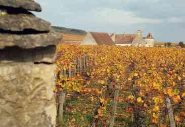 winnice Burgundii