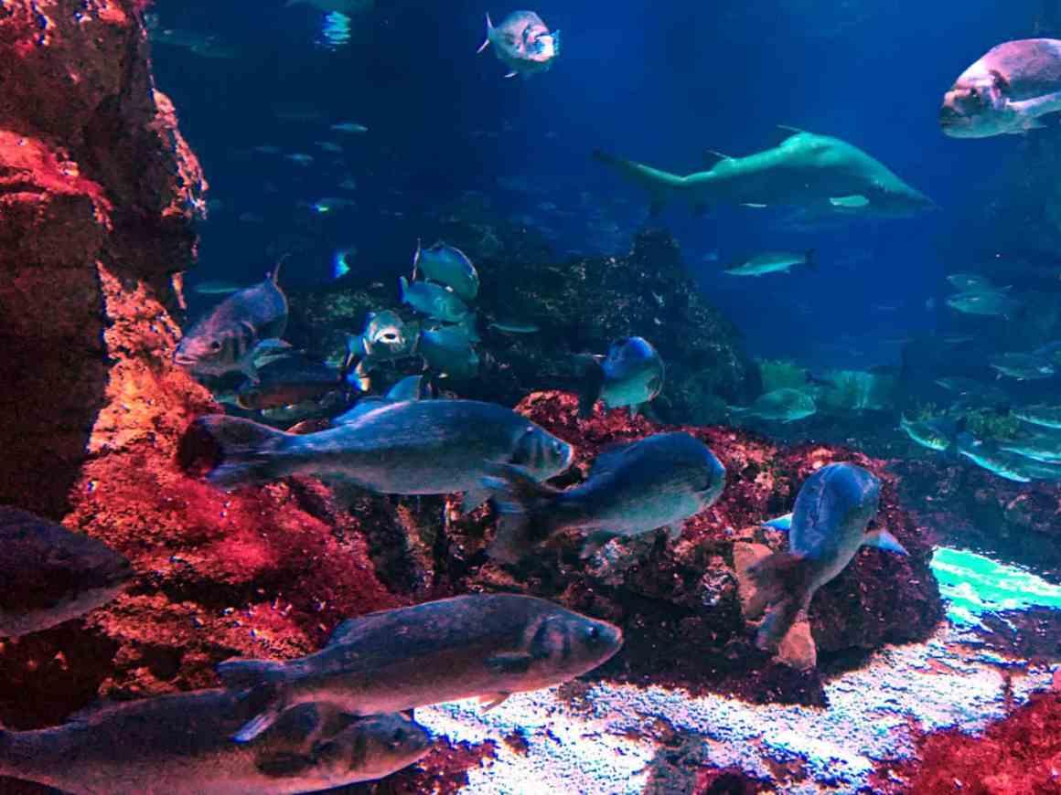 Aquarium w Barcelonie