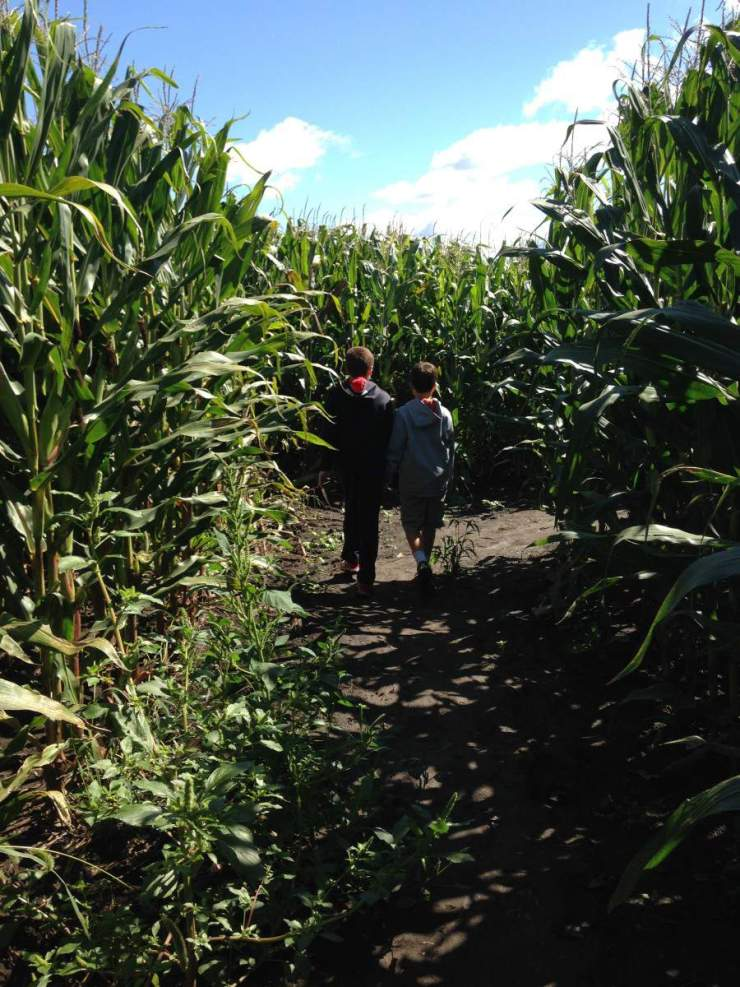 Explore Richardson Corn Maze-Kids Are A Trip