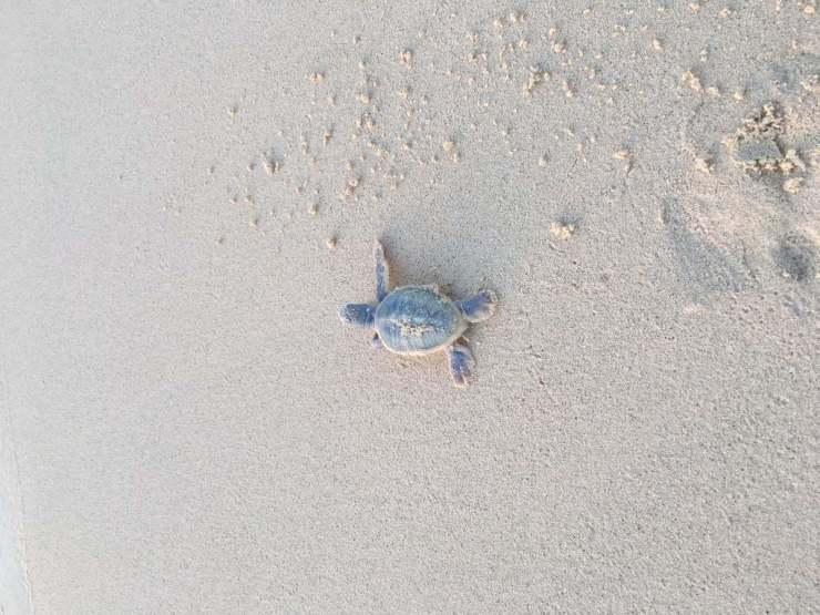 Sea Turtle Program Cabo-Kids Are A Trip