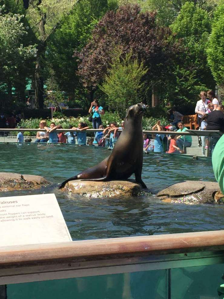 Family Friendly Things to Do in Manhattan Central Park Zoo-Kids Are A Trip