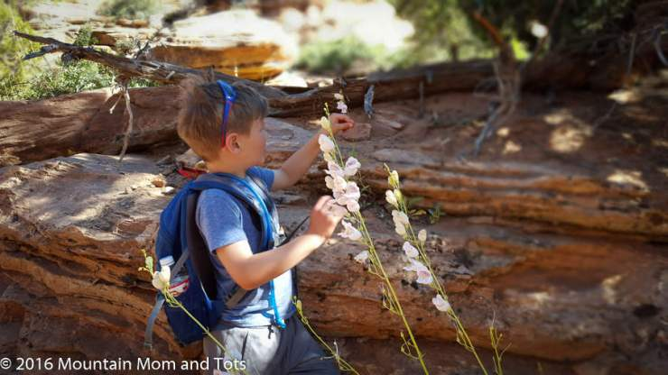 family-friendly-things-to-do-in-zion-hike-kids-are-a-trip