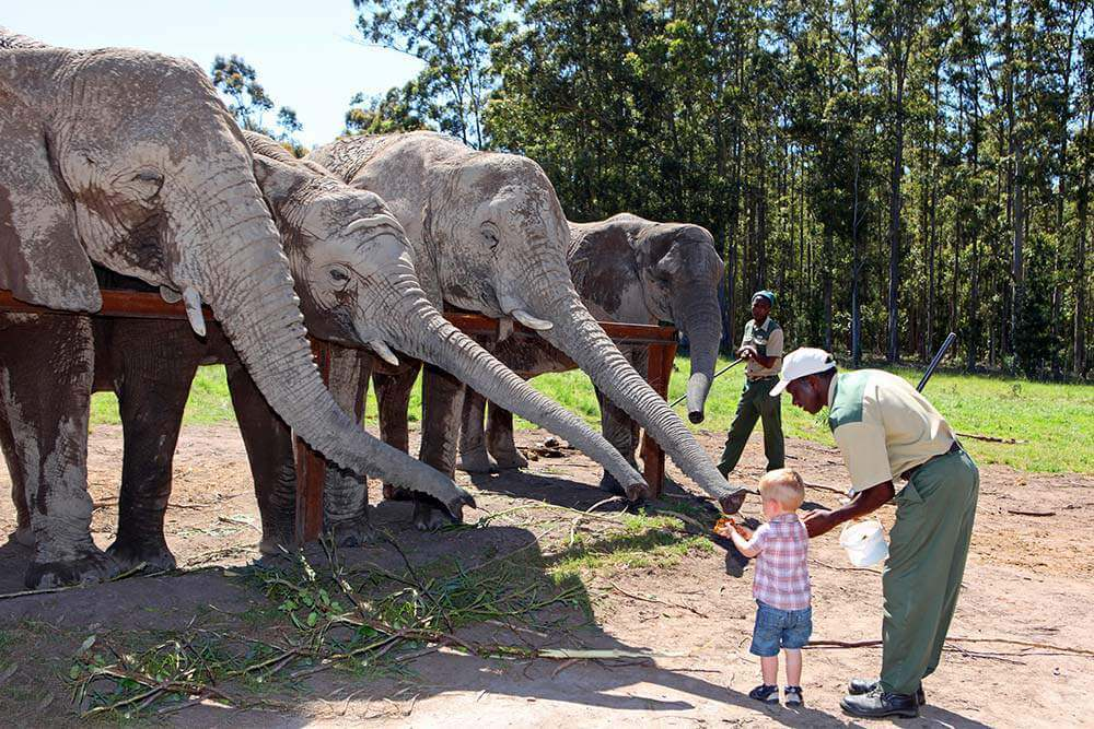 Best Family Vacation Destinations for 2017 South Africa-Kids Are A Trip