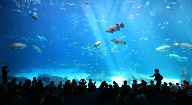 Family Friendly Things to Do in Atlanta Visit Georgia Aquarium-Kids Are A Trip