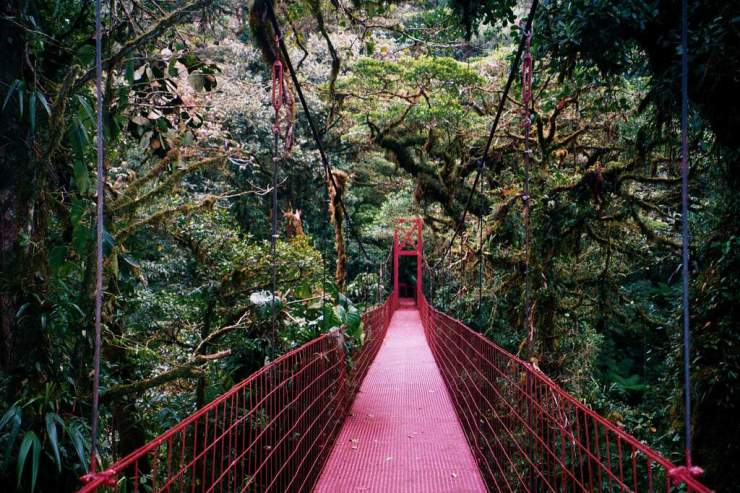 Things to Do in Costa Rica Visiting the Monteverde Cloud Forest Hanging Bridges-Kids Are A Trip