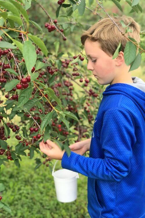Things-to-do-in-Door-county-with-Kids-Cherry-Orchard-Kids-Are-A-Trip