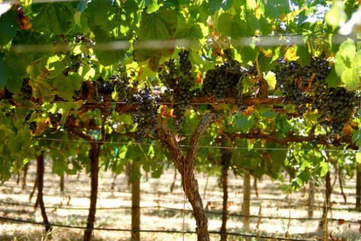 Sterling-Vineyards-Napa-and-Sonoma-with-Kids-Kids-Are-A-Trip
