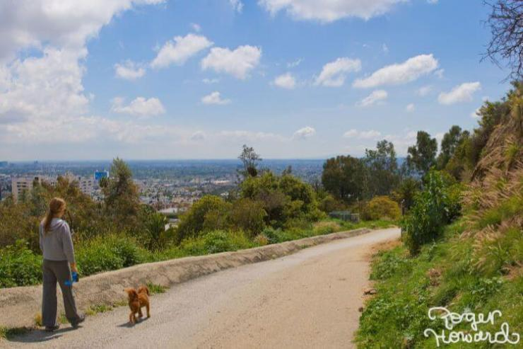 Hiking Runyon Canyon with Rescue dogs Airbnb-Kids are A Trip