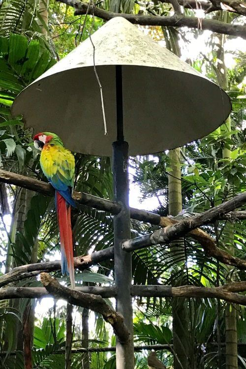 Zoo-Ave-Animal-Sanctuary-Costa-Rica-Kids-Are-A-Trip