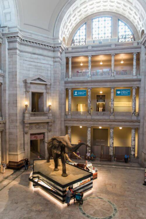 Smithsonian-Natural-History-Museum-Washington-DC-with-kids-Kids Are A Trip