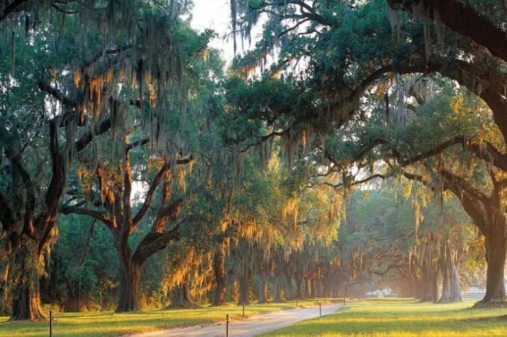 Boone Hall Plantation's welcoming oak lined entrance is one of the places that makes for a fun Charleston girls getaway spot. - Kids Are A Trip