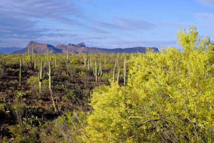 Saguaro National Park West Tucson-Kids Are A Trip