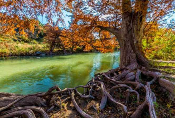 Guadalupe River State Park Texas-Kids Are A Trip