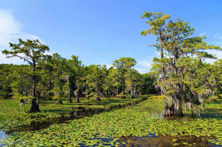 Caddo Lake Cypress Trees in Texas-Kids Are A Trip