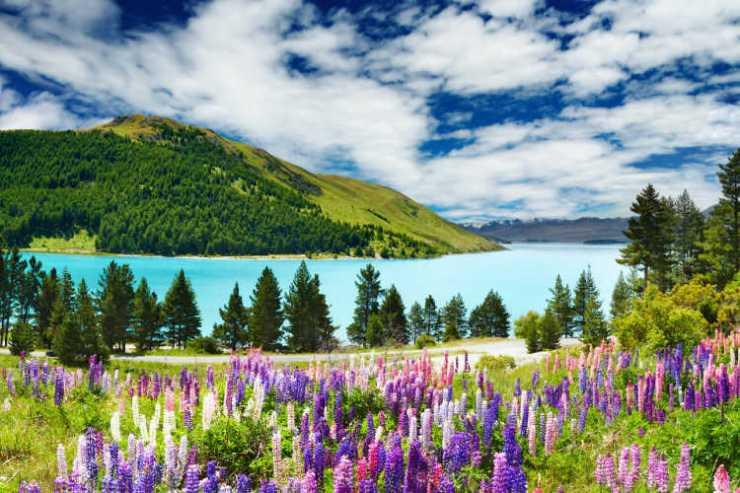 New Zealand mountain flowers lake
