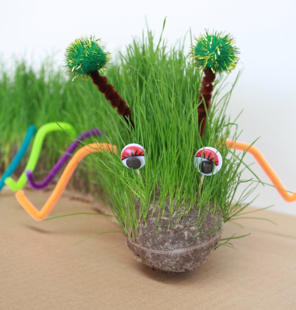 Grow-your-furry-pet-caterpillar