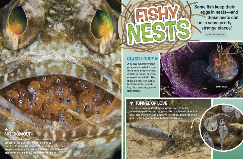 Fishy Nests