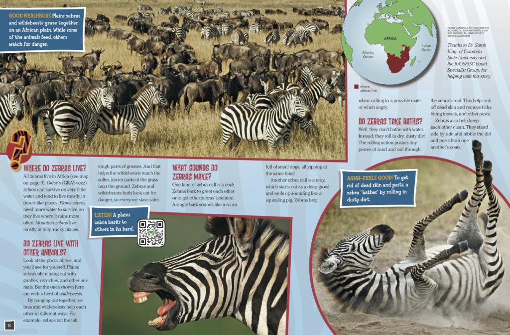 Zebras 2