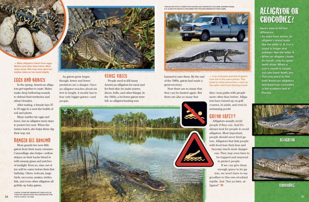 Alligators Ranger Rick September 2017 3