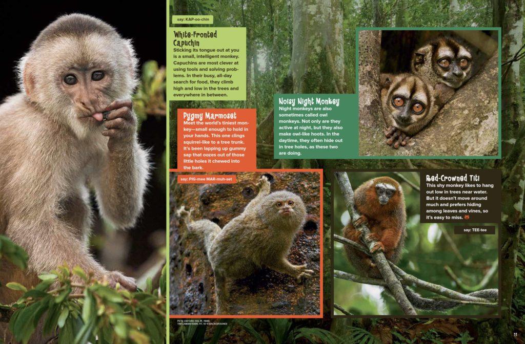 Monkey Paradise Ranger Rick March 2017 3