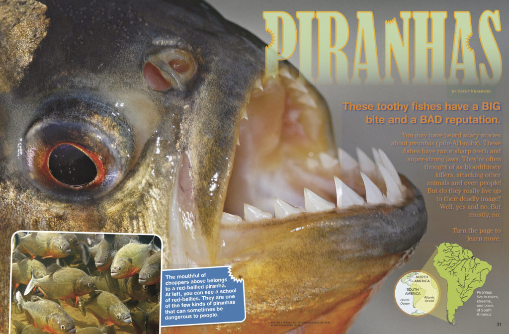 Piranhas1-RangerRick-March2018