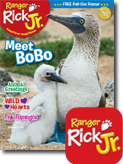 RR Jr digital magazine